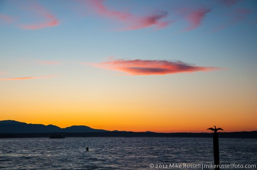 Day 150: Cormorant Sunset
