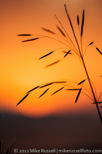 Day 235: Sunset Grass