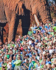 Sounders-Chelsea: Fans about to be trampled by giant elephant