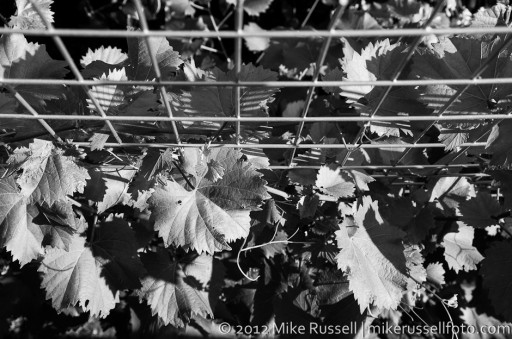 Day 266: Vines from Above