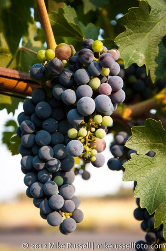 Day 282: Post-Veraison Cab