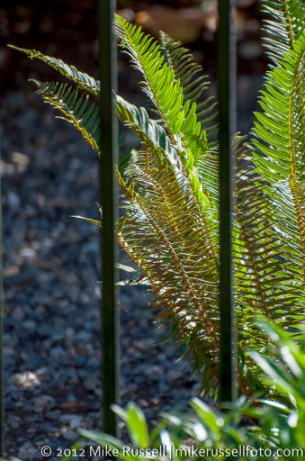 Day 271: Caged Fern