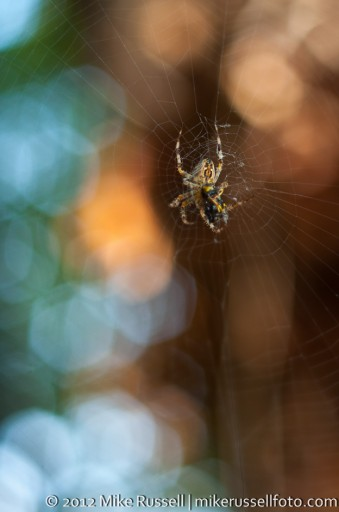 Day 304: The Spider and the Yellow Jacket