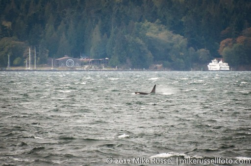 Day 337: West Seattle whale watching